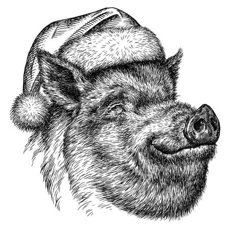 black and white engrave isolated pig illustration Standard-Bild - 156392220