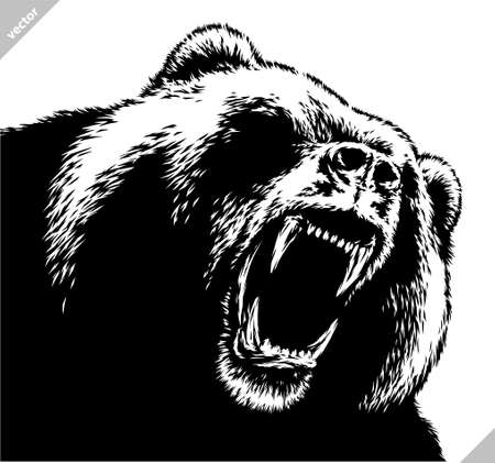black and white linear draw bear vector illustration Standard-Bild - 155802523