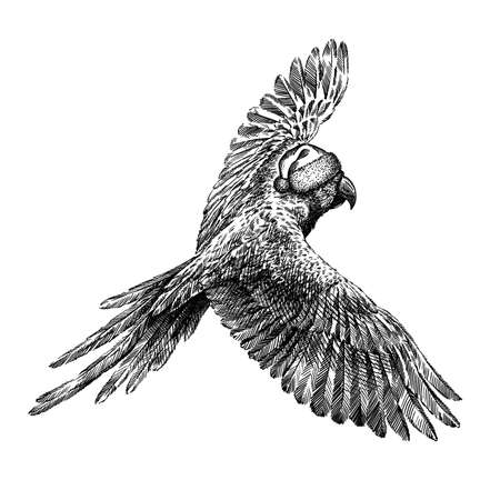 black and white engrave isolated parrot illustration