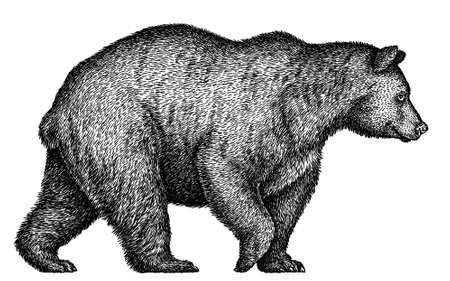 black and white linear paint draw bear illustration Imagens - 159252922