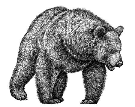 black and white linear paint draw bear illustration
