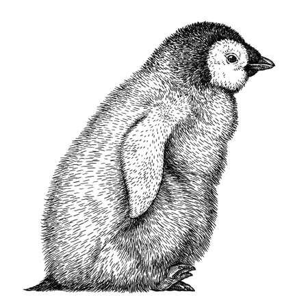 black and white linear paint draw penguin illustration