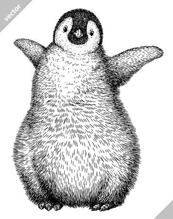 black and white linear paint draw penguin vector illustration