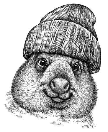 black and white engrave isolated wombat illustration Standard-Bild