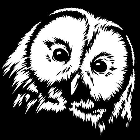 black and white linear paint draw owl illustration art