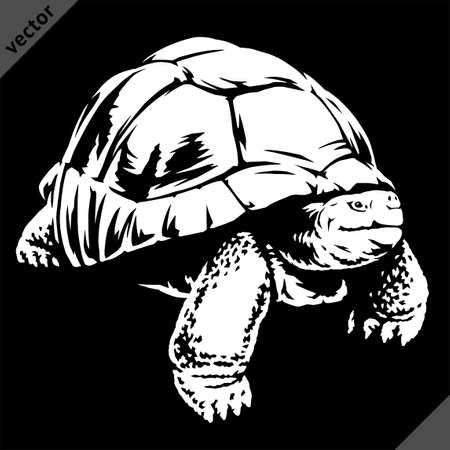 black and white linear paint draw turtle vector illustration art