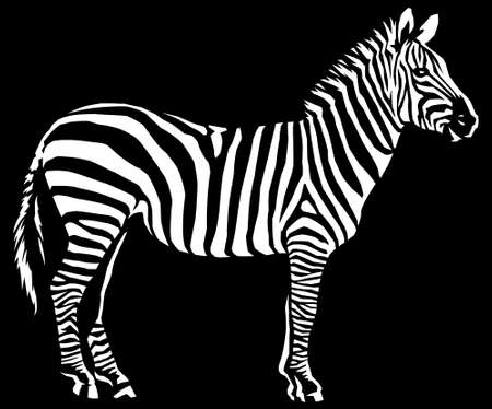 black and white linear paint draw zebra illustration art