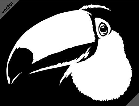 black and white linear paint draw Toucan vector illustration art