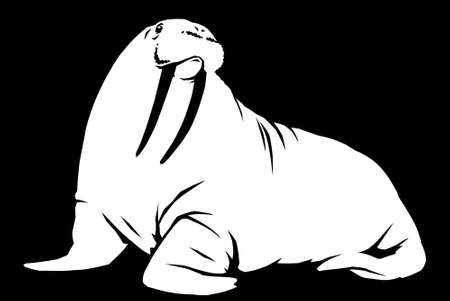 black and white linear paint draw walrus illustration art 写真素材