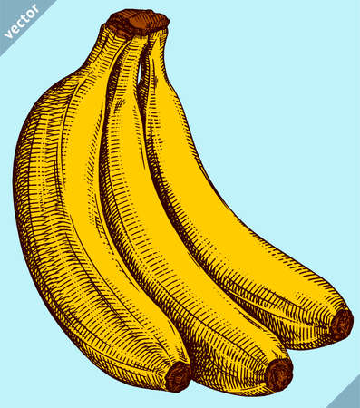 Engrave isolated banana hand drawn graphic vector illustration Ilustração