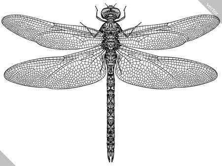 Engrave isolated dragonfly hand drawn graphic illustration Illustration