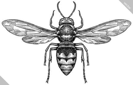 Engrave isolated wasp hand drawn graphic illustration