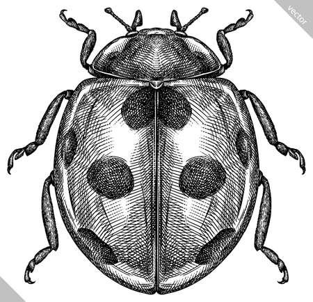 Engrave isolated ladybug hand drawn graphic illustration