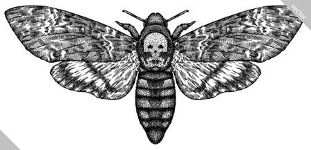 Engrave isolated moth hand drawn graphic illustration