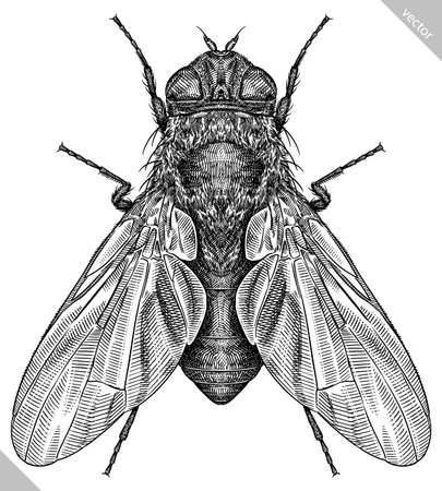Engrave isolated fly hand drawn graphic illustration Illustration