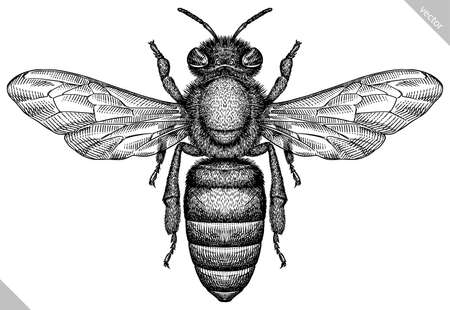 Engrave isolated bee hand drawn graphic illustration