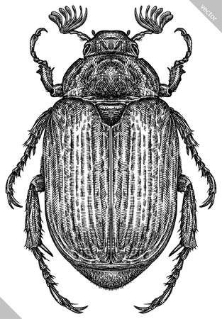 Engrave isolated beetle hand drawn graphic illustration