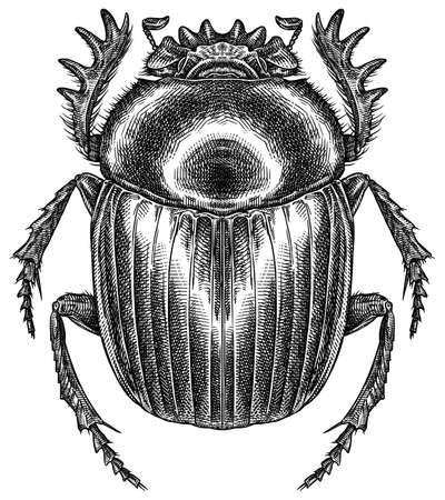 Engrave isolated scarab hand drawn graphic illustration 版權商用圖片