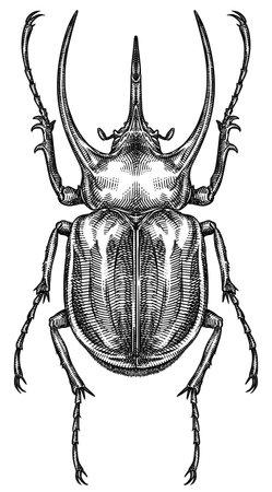 Engrave isolated rhinoceros beetle hand drawn graphic illustration 版權商用圖片