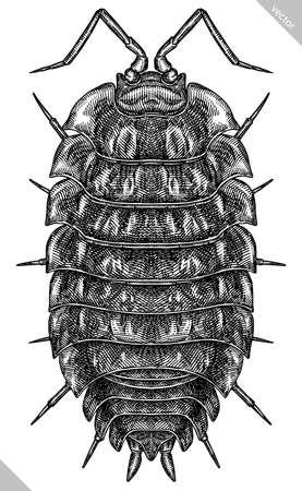 Engrave isolated woodlouse hand drawn graphic illustration 向量圖像
