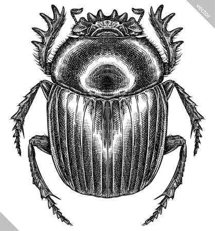 Engrave isolated scarab hand drawn graphic illustration 向量圖像