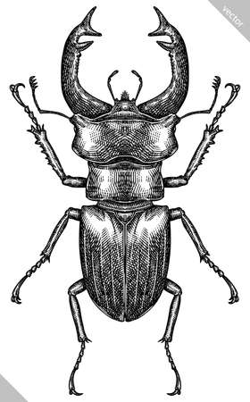 Engrave isolated stag beetle hand drawn graphic illustration