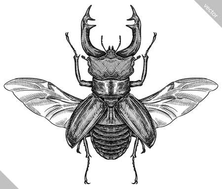 Engrave isolated stag beetle hand drawn graphic illustration 向量圖像