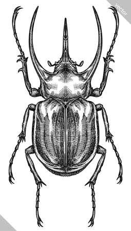 Engrave isolated rhinoceros beetle hand drawn graphic illustration 向量圖像
