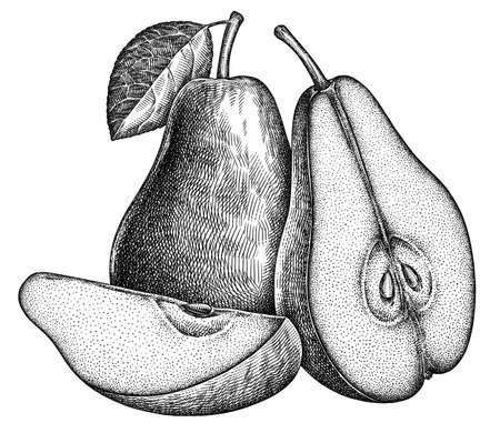 Engrave isolated pear hand drawn graphic illustration Stock fotó
