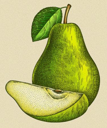 Engrave isolated pear hand drawn graphic illustration 版權商用圖片