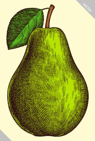 Engrave isolated pear hand drawn graphic vector illustration