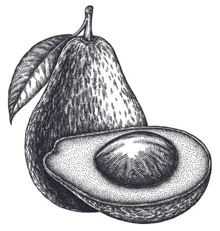 Engrave isolated avocado hand drawn graphic illustration