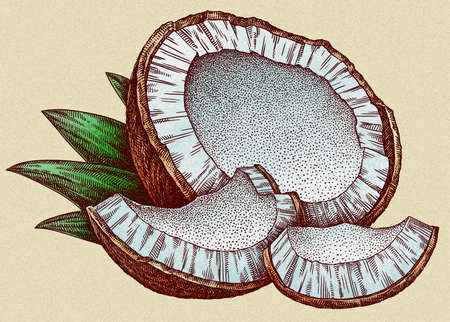 Engrave isolated coconut hand drawn graphic illustration