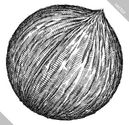 Engrave isolated coconut hand drawn graphic vector illustration Illusztráció