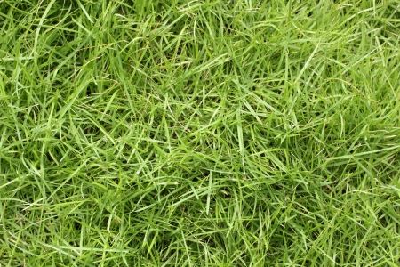 Green grass field background and textures Stock Photo