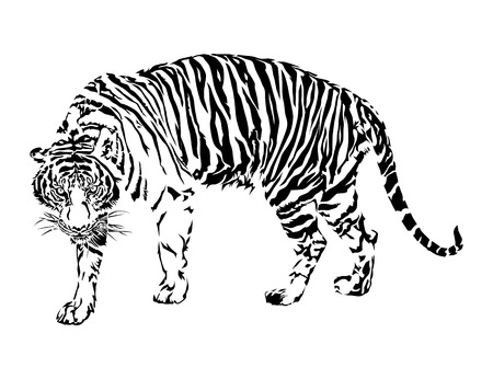 atrocious: Tiger walking, black and white color, illustration design.
