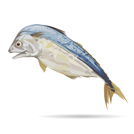 Mackerel fish with digital painting, illustration and design.