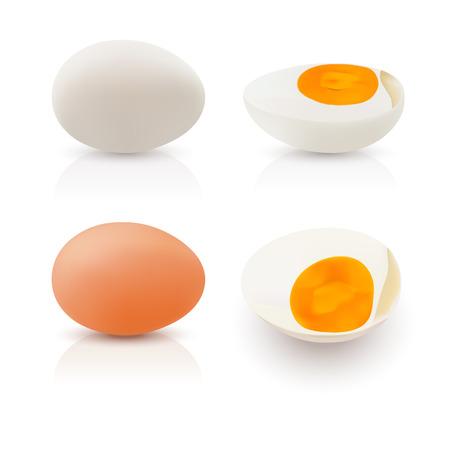 Realistic illustration egg white and egg yolks on white background.
