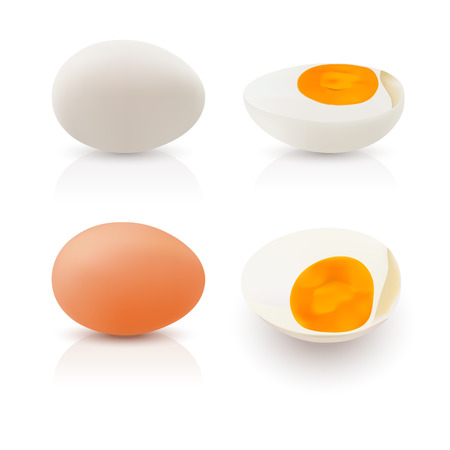 Realistic illustration egg white and egg yolks on white background.