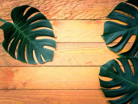 Green tropical leaves on orange wood background, template for design work.
