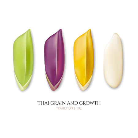 Thai grain and growth, collection, vector illustration and design.