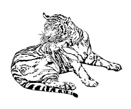 Tiger relaxing at a zoo in Thailand, Vector illustration and drawing. Illustration