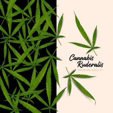 Cannabis Ruderalis Leaf, Vector illustration and design. Illustration