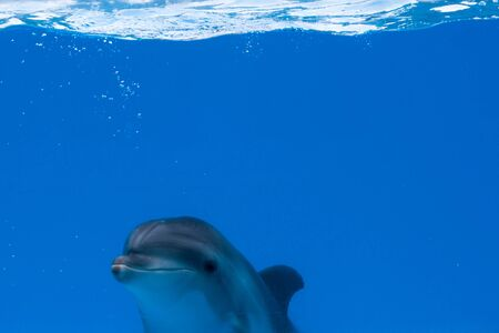 Happy dolphin in dolphinarium under the blue water