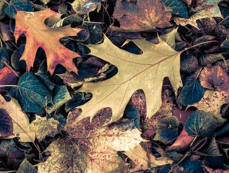 maybe: Big Autumn leaves of maybe maple, very interesting colors and texture. Dots and spots make it dramatic.
