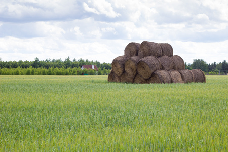 Hay stored bales on green meadow in summer background