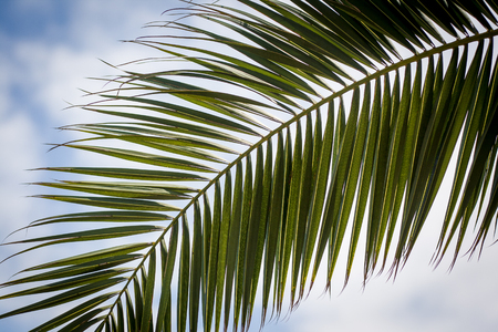 Leaves of a palm tree on a tropical beach on blue sky with clouds Stock Photo