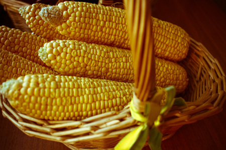 Composition of maze or corn in weave basket. Autumn harvest detail, very warm vintage retro sepia color filter Stock Photo