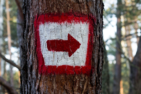 Red hiking arrow on white painted on tree for navigation in the forest