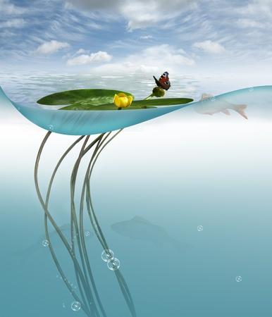 floating on water: Lake.